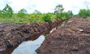 Cara Mengurangi Keasaman Tanah Gambut